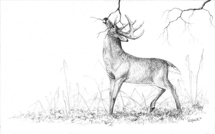 Top Pencil Sketches Of Wild Animals Ideas Wild Animals Pencil Drawings - Gigantesdescalzos Photo