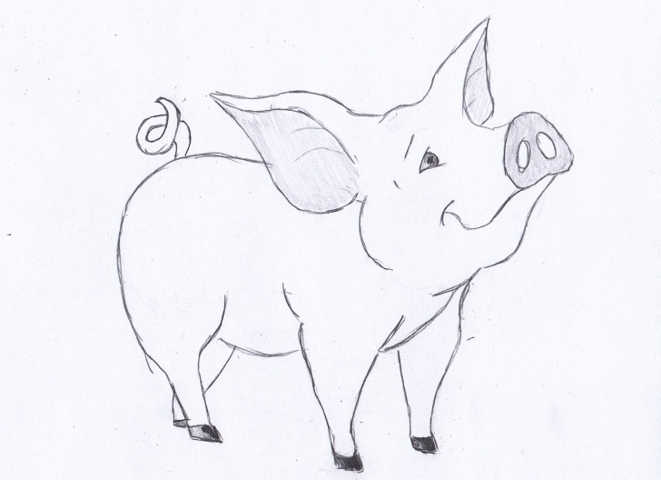 Top Pig Pencil Drawing Ideas Pig Sketch Images At Paintingvalley | Explore Collection Of Pig Pictures