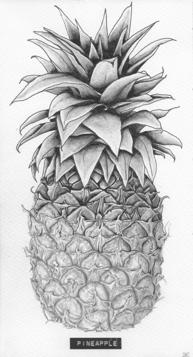 Top Pineapple Pencil Drawing for Beginners Pineapple Drawing | Title: 'pineapple' Client: Sla Type: Drawing Images