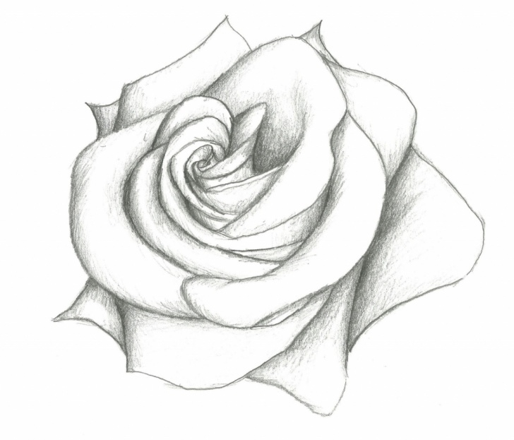 Top Simple Pencil Drawings Of Flowers Step by Step Pencil Sketch Images Flowers At Paintingvalley | Explore Picture
