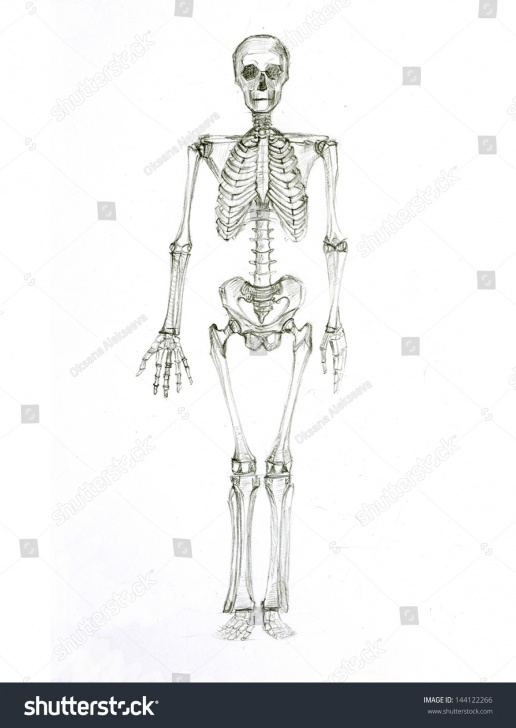 Top Skeleton Pencil Drawing Techniques for Beginners Pencil Sketch Skeleton Stock Illustration 144122266 Pics