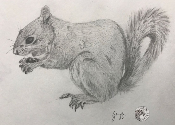 Top Squirrel Pencil Drawing for Beginners Squirrel – Graphite Drawing ? | Art By Ganga | Graphite Drawings Photos