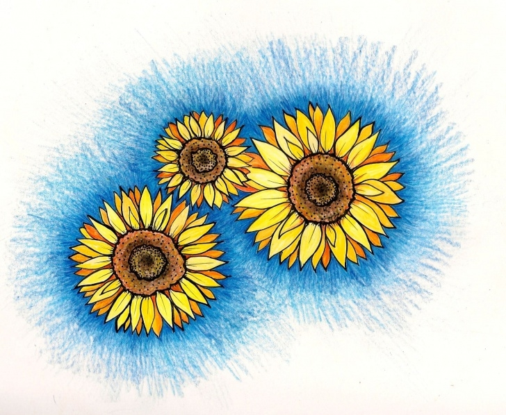 Top Sunflower Colored Pencil Courses Sunflowers Colored Pencil, Original Drawing | Original Art Pic