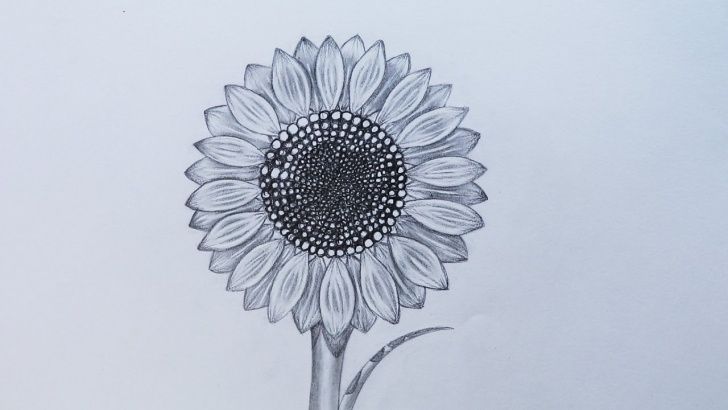 Top Sunflower Pencil Drawing Techniques How To Sketch A Sunflower Picture