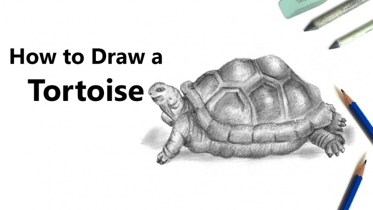 Top Tortoise Pencil Sketch Easy Tortoise Pencil Drawing - How To Sketch Tortoise Using Pencils Photo