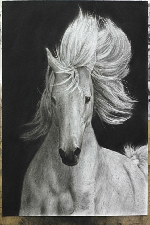 Top White Charcoal Drawings Tutorial Realistic Charcoal Drawing Of A White Horse :) — Steemit Pics