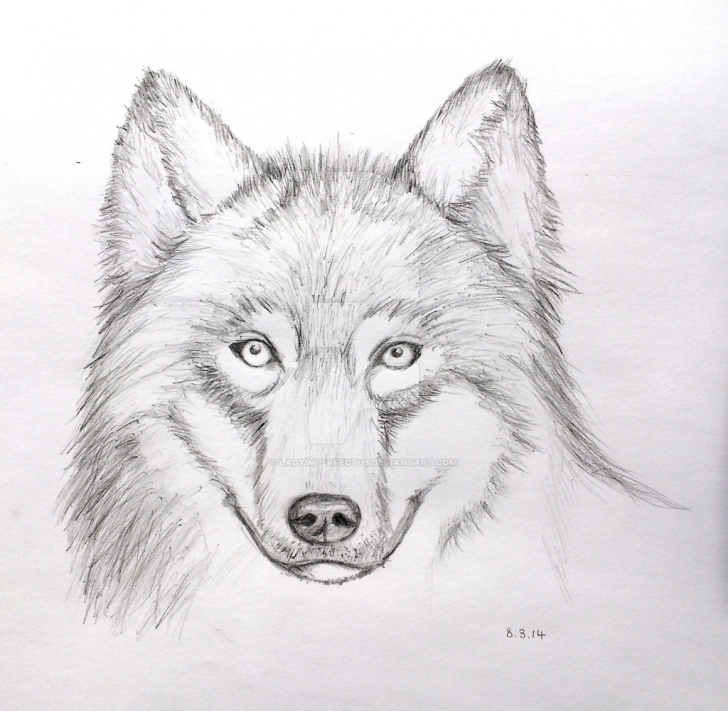 Top Wolf Drawings In Pencil Free Pencil Sketch Of Wolf At Paintingvalley | Explore Collection Of Photos