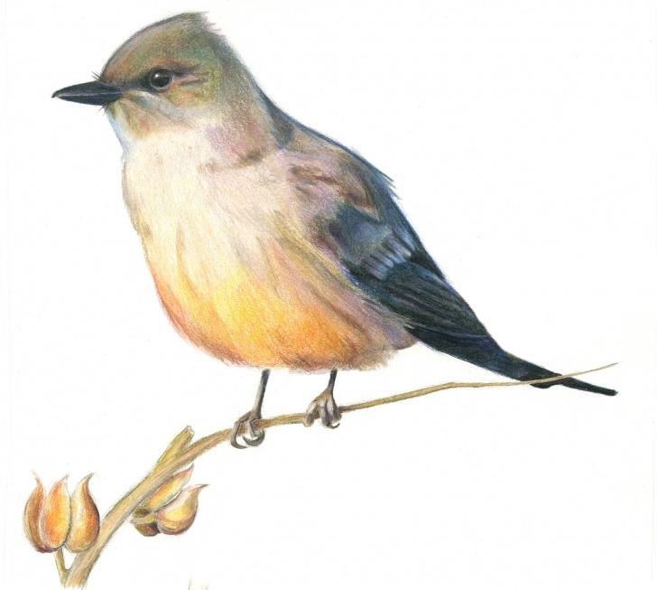 "Wonderful Bird Colored Pencil Tutorial Idap Of A Bird, Colored Pencil, 12X12"" : Idap Picture"