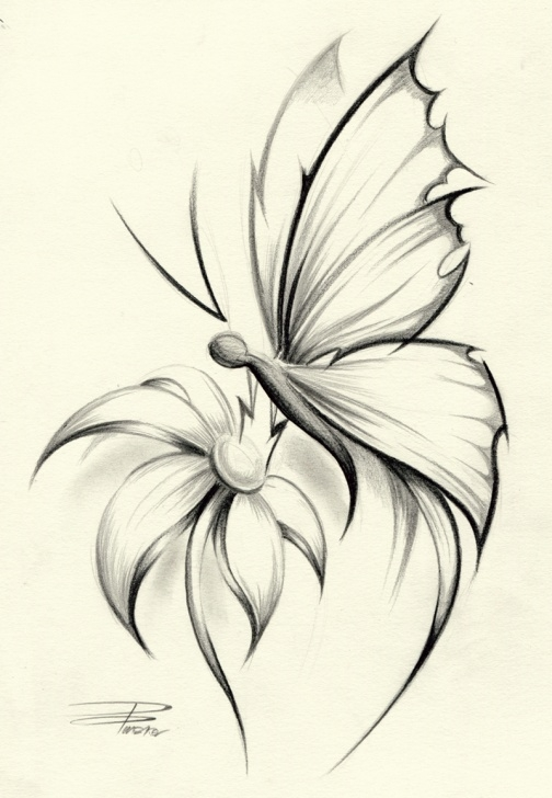 Wonderful Butterfly Pencil Art Courses Butterflies Pencil Sketch And Pencil Drawings Of Flowers And Image