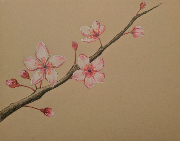 Cherry Blossom Pencil Drawing