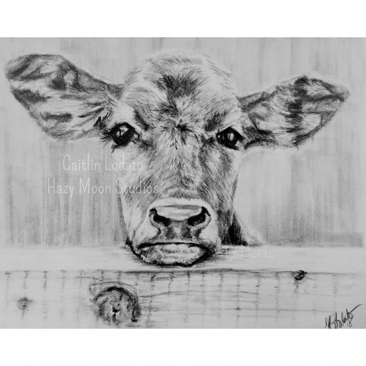 Wonderful Cow And Calf Pencil Drawing Tutorials Calf In Pencil Print , Cow, Cute Cow, Cow Face, Cow Print, Pencil Print Of  A Cow Calf, Brown Cow Images