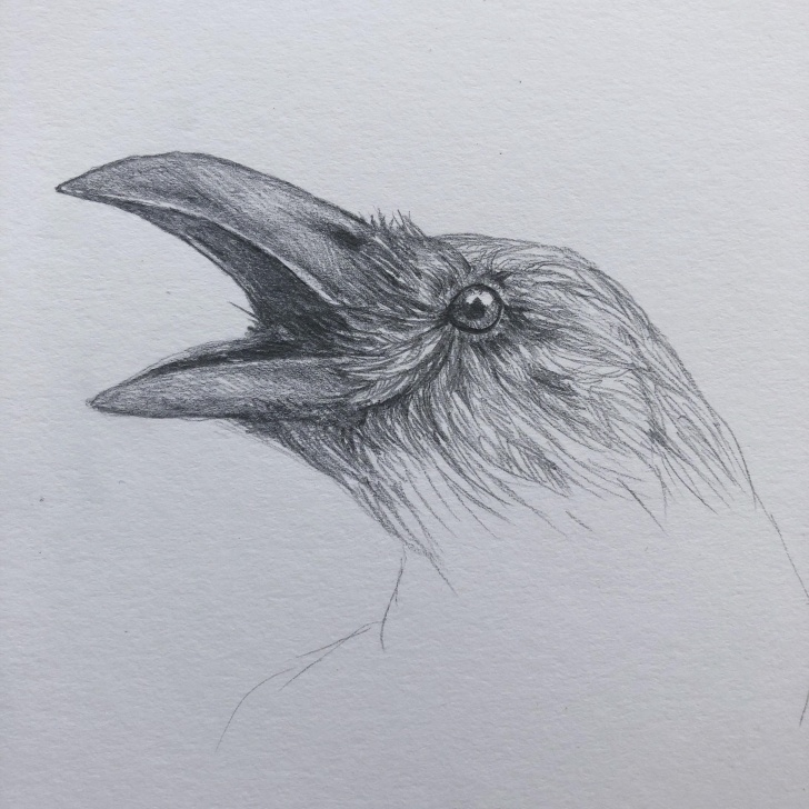 Wonderful Crow Pencil Drawing for Beginners Ka Ka Crow (Pencil) : Drawing Pic