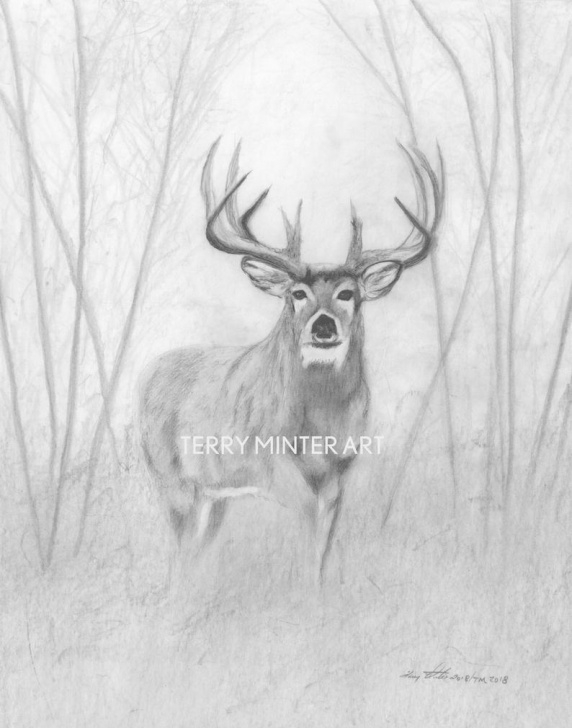 "Wonderful Deer Pencil Sketch Techniques Whitetail Deer Pencil Sketch Print ""woodland Buck"", Graphite Pencil Print,  Canada Animal Art Print, Deer Pencil Drawing, Moose Jaw Artist Photo"