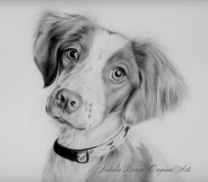 Wonderful Dog Pencil Art Simple Cute Dog Pet Portrait Pencil Drawing. | .~Realistic Drawings~. In Pic