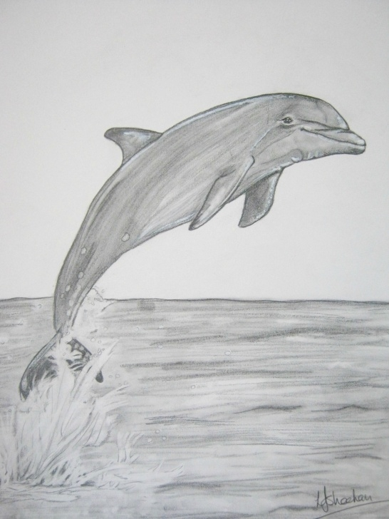 Wonderful Dolphin Pencil Drawing for Beginners Dolphin A4 Graphite, | Bianca In 2019 | Drawings, Dolphin Painting Image