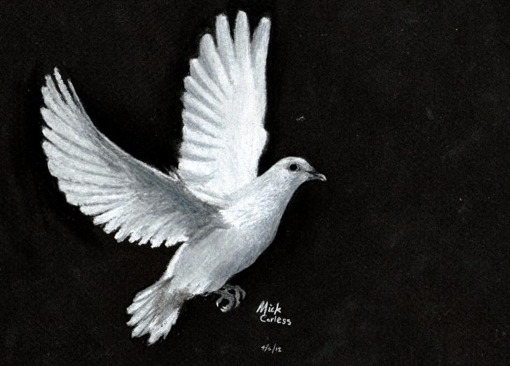 Wonderful Dove Drawings Pencil Free Dove | Artmkc Photo