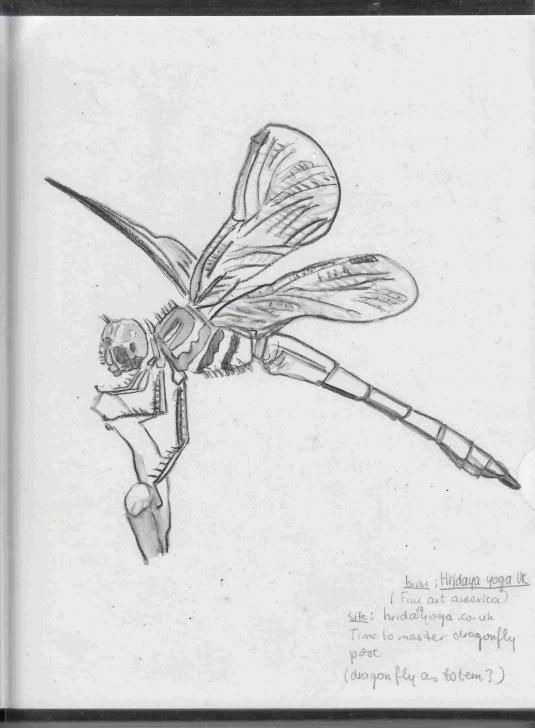 Wonderful Dragonfly Pencil Drawing Tutorial Pencil Drawings Of Dragonflies | Drawing Work Photos