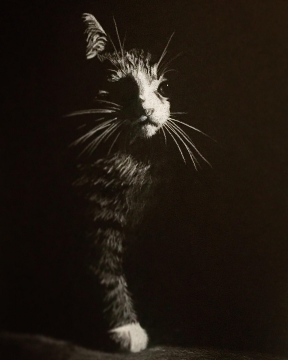 Wonderful Drawing On Black Paper With White Pencil Lessons Cat On Black Paper With White Colored Pencil : Drawing Image