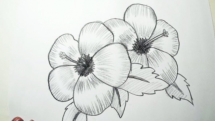 Wonderful Easy Flower Drawings In Pencil Free How To Draw Hibiscus Flowers || Pencil Drawing, Shading For Beginners Images