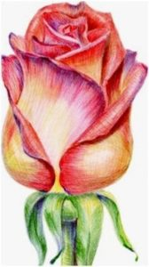 Wonderful Easy Pencil Colour Drawing Step by Step Create Colored Pencil Still Life Drawings, Landscapes, Portraits And Images