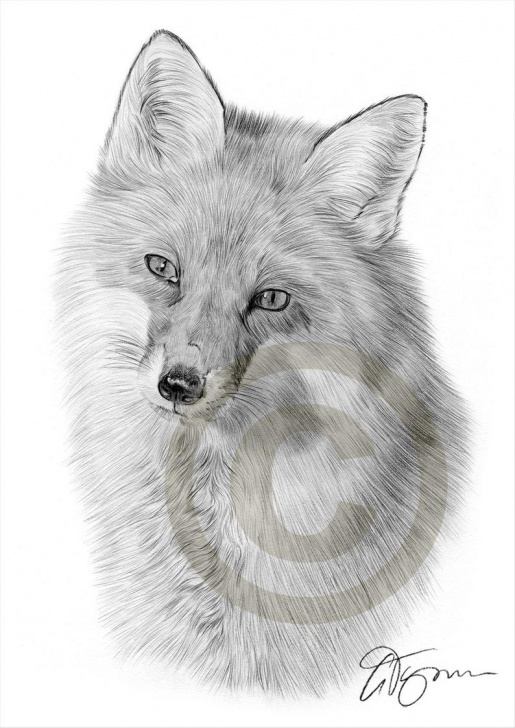 Wonderful Fox Pencil Drawing Simple Red Fox Pencil Drawing Print - Wildlife Art - Artwork Signed By Artist Gary  Tymon - Ltd Ed 50 Prints Only - 2 Sizes - Animal Pencil Portrait Pic
