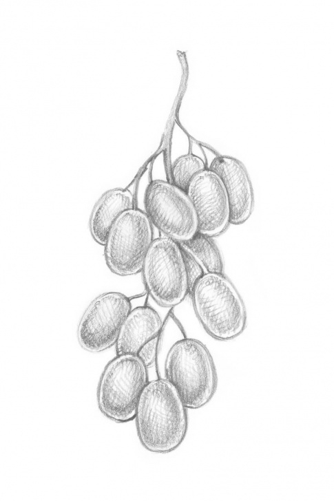 Wonderful Fruits Pencil Drawing Courses How To Draw 10 Different Varieties Of Berry Photos