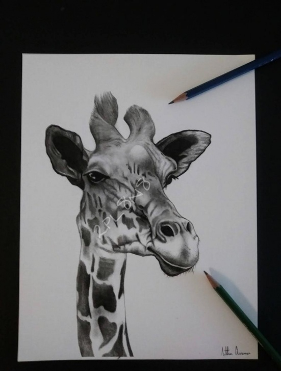 Wonderful Giraffe Pencil Drawing Tutorial Giraffe Pencil Drawing Print Photos
