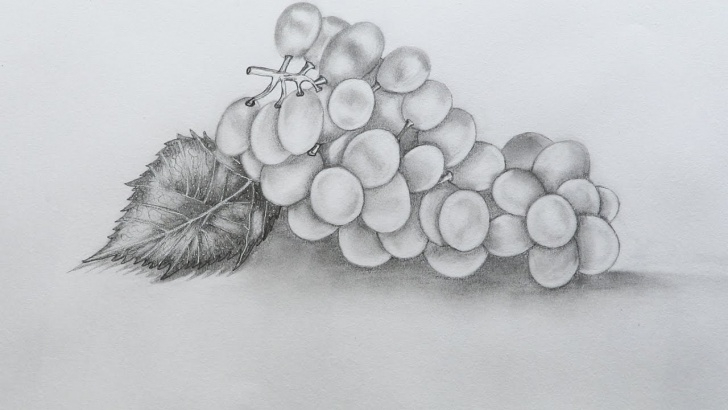 Wonderful Grapes Pencil Drawing Easy How To Sketch A Grapes Photos