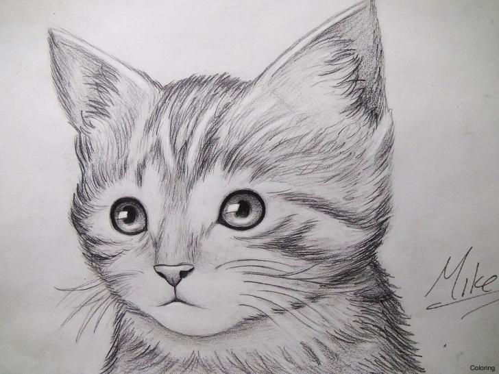 Wonderful Kitten Pencil Drawing Courses 10+ Kitten Pencil Drawing - Pencil Drawing - Drawing Sketch Painting Picture