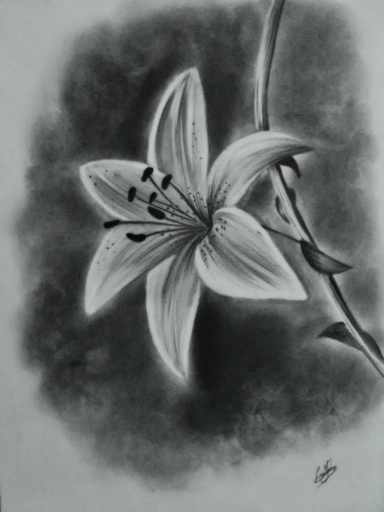 Wonderful Lily Pencil Drawing Easy 45 Beautiful Flower Drawings And Realistic Color Pencil Drawings Photo