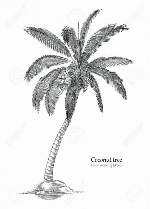 Palm Tree Pencil Drawing