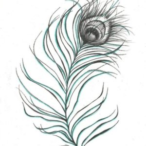Wonderful Peacock Feather Pencil Sketch for Beginners Images For > Pencil Drawing Pictures Of Peacock | Ink | Peacock Images