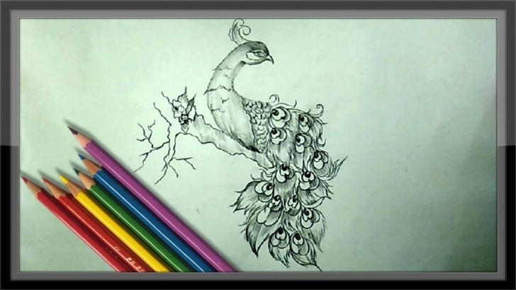 Wonderful Peacock Pencil Sketch Tutorials Cool Easy Drawings - Pencil Drawing A Beautiful Peacock Pictures
