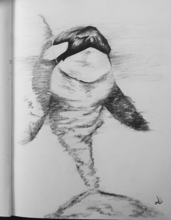 Wonderful Pencil And Ink Drawings for Beginners Charcoal Orca | Art-Pencil/ink Drawings In 2019 | Pencil Drawings Photo
