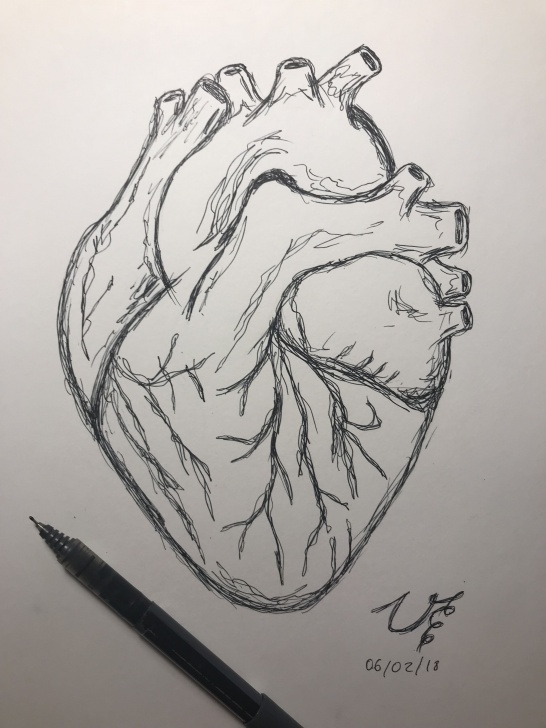 Pencil Sketch Of Human Heart