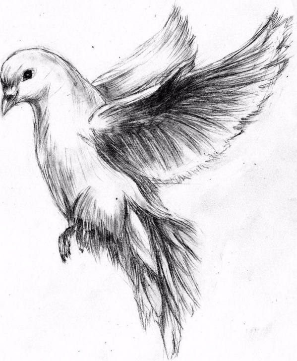 Wonderful Pencil Sketches Of Birds Step by Step Flying Dove Pencil Drawing - Google Search … | Birds | Drawi… Pic
