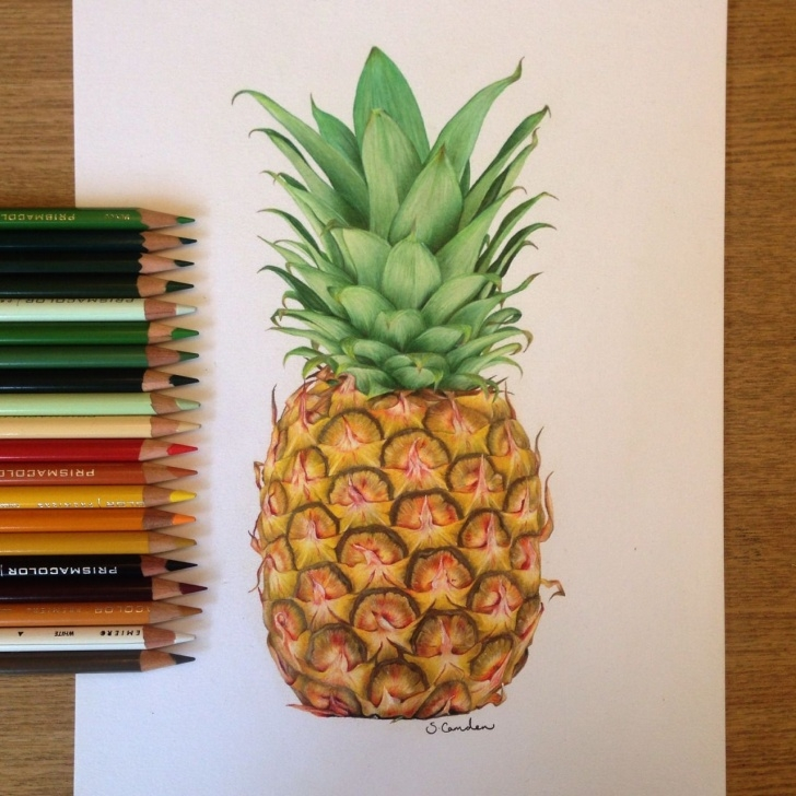 Wonderful Pineapple Pencil Drawing Techniques Pineapple Drawing Using Prismacolor Pencils ✨ … | Artsy Stuff In 2019… Photos