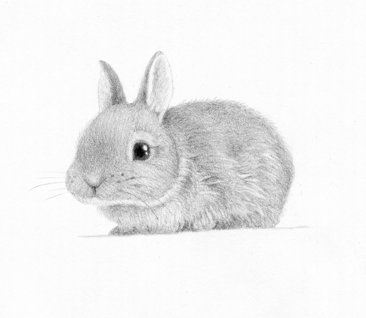 Wonderful Rabbit Sketch In Pencil Lessons Bunny Drawing, Pencil, Sketch, Colorful, Realistic Art Images Images
