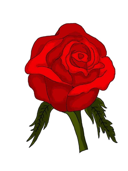 Wonderful Rose Drawing Colour Techniques for Beginners Rose Flower Drawing With Color | Drawing Work Images