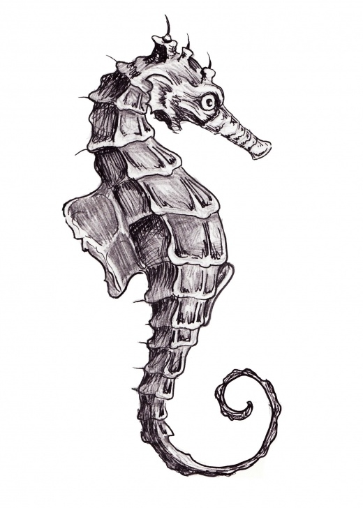 Wonderful Seahorse Pencil Drawing Free Seahorse Tattoo Concept. Sketch By Caitlin Jab. Line Drawing. Linear Image