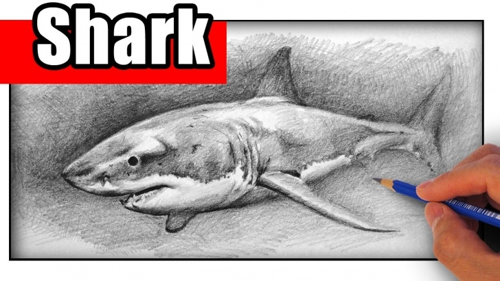 Wonderful Shark Pencil Drawing for Beginners How To Draw A Shark With Pencil Pics