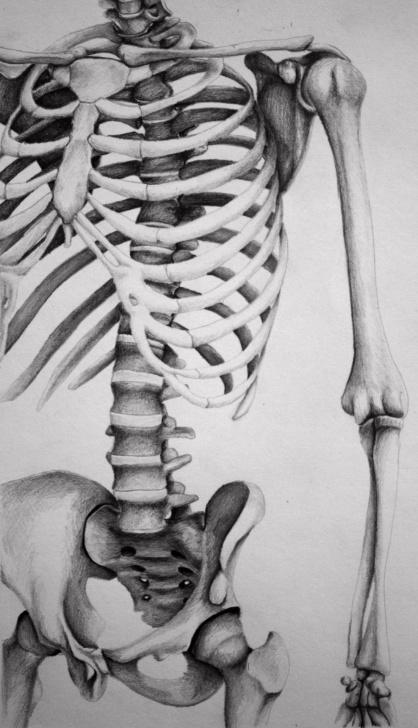 Wonderful Skeleton Pencil Drawing Step by Step Skeleton Medium: Pencil Artist: Melissa B | Drawings | Skeleton Photos