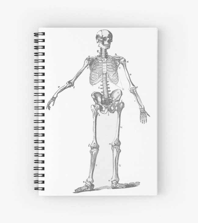 Wonderful Skeleton Pencil Drawing Techniques 'the Human Skeleton As A Pencil Drawing' Spiral Notebook By Historyforyou Picture