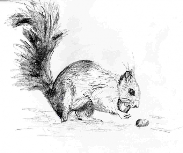 Wonderful Squirrel Pencil Drawing Simple Simple Squirrel Pencil Drawing Images