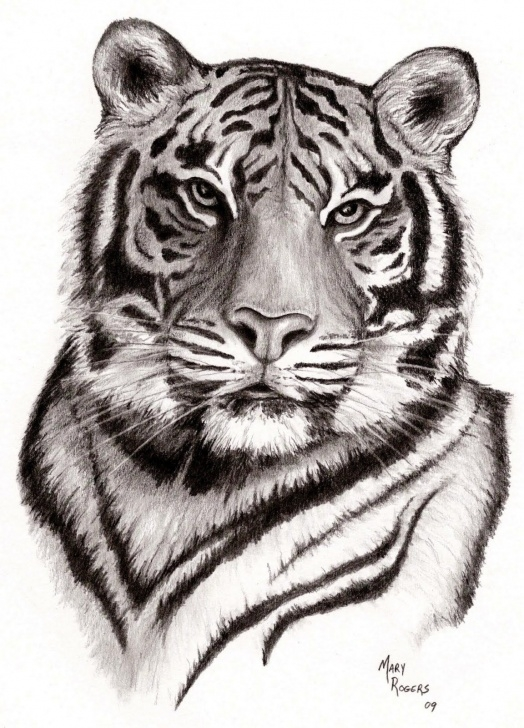 Wonderful Tiger Face Drawing Pencil Techniques for Beginners Pin By Jewelry By White Tiger On Chinese Zodiac Symbol ( Tiger ) In Pictures