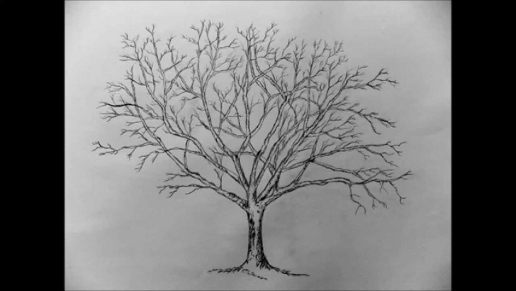 Wonderful Tree Pencil Sketch Easy How To Draw A Tree With Pencil Step By Step Images