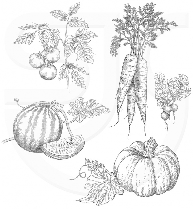Wonderful Vegetables Pencil Drawing Easy Vegetables Line Drawing At Paintingvalley | Explore Collection Images