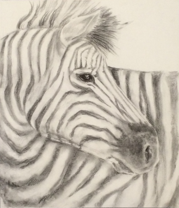 Wonderful Zebra Pencil Drawing Ideas Pencil Drawing, Zebra | Collidescopes Photos